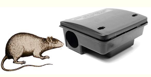 Eradication des rats à Hoedic : un succès à ce jour